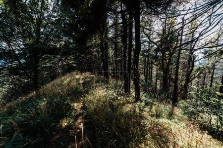 Photo pour Lumière du soleil sur les arbres verts avec des brindilles dans le stationnement - image libre de droit