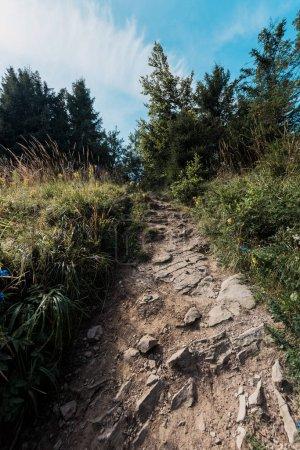 Photo pour Vue à faible angle des arbres verts près des rochers sur la passerelle - image libre de droit