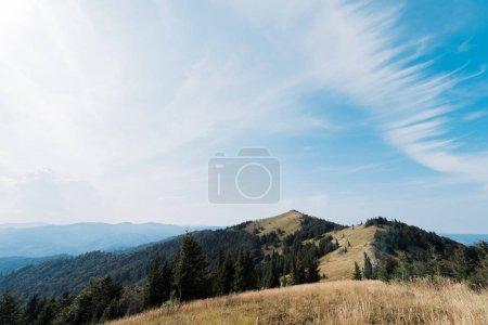 Photo pour Prairie en montagne avec des sapins verts contre le ciel - image libre de droit
