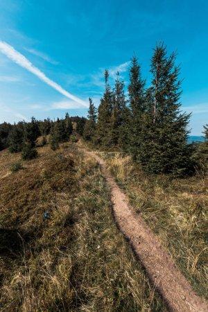 Photo pour Passerelle près du champ et des sapins verts sur la colline contre le ciel bleu - image libre de droit