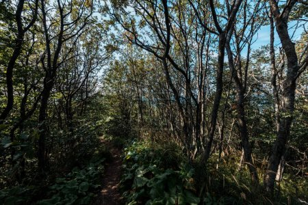 Photo pour Lumière du soleil sur des branches avec des lames sur des arbres dans des bois - image libre de droit