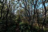 """Постер, картина, фотообои """"солнечный свет на ветвях с листьями на деревьях в лесу"""""""