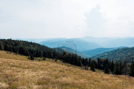 Photo for Golden meadow in mountains with green trees against sky - Royalty Free Image