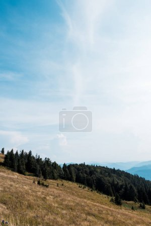 Photo for Golden field in mountains with green trees against blue sky - Royalty Free Image