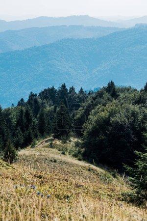 Photo pour Foyer sélectif des montagnes avec des arbres verts contre le ciel - image libre de droit