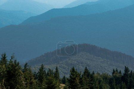 immergrüne Tannen in der Nähe ruhiger Berge