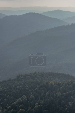 Photo for Green fir trees in mountains with fog - Royalty Free Image