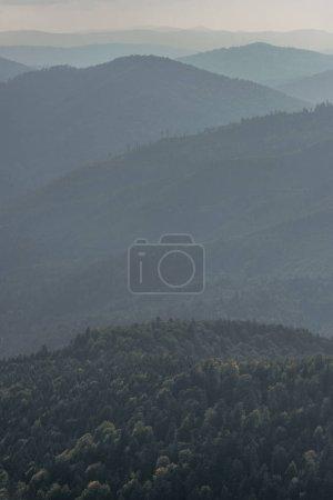 Photo pour Sapins verts dans les montagnes avec brouillard - image libre de droit