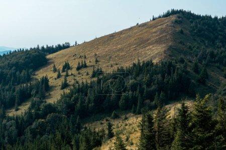 Photo pour Pins verts sur la colline contre le ciel - image libre de droit