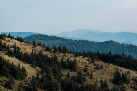Photo pour Pelouse jaune avec des pins dans des montagnes contre le ciel - image libre de droit