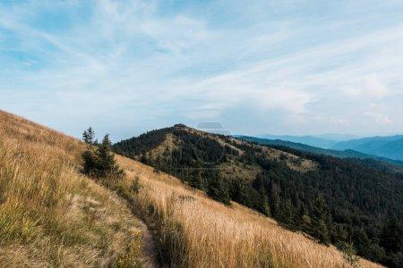 prairie jaune avec orge dans les montagnes contre ciel avec nuages