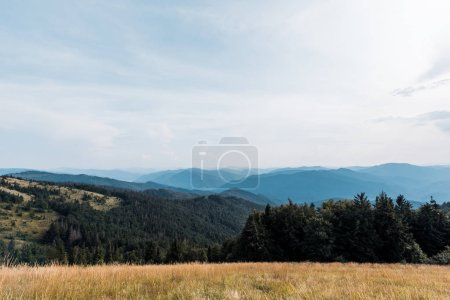 Photo for Yellow barley in meadow near mountains against sky - Royalty Free Image