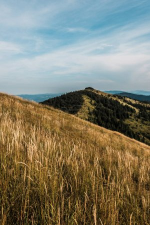 Photo for Golden meadow in mountains with green trees against sky with clouds - Royalty Free Image