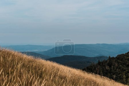 Photo for Yellow barley in lawn near trees and mountains - Royalty Free Image