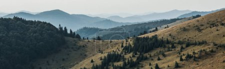 Panoramaaufnahme von goldenem Rasen mit Kiefern in der Nähe der Berge