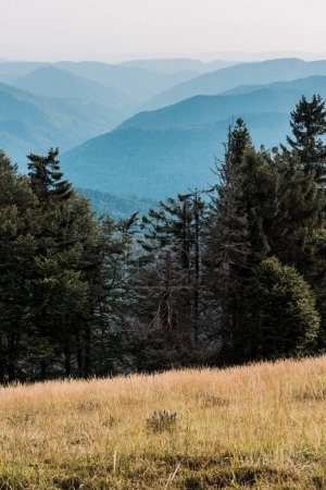 Photo for Scenic and blue silhouette of mountains near pine trees - Royalty Free Image