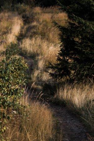 Photo pour Vue aérienne de passerelle dans le domaine d'or près des arbres - image libre de droit