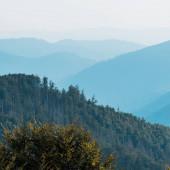 """Постер, картина, фотообои """"силуэт гор возле елей на холме"""""""