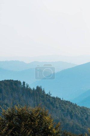 Photo pour Silhouette bleue des montagnes près des sapins sur la colline - image libre de droit