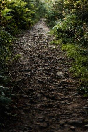 Foto de Enfoque selectivo de hojas secas cerca de la hierba en los bosques - Imagen libre de derechos