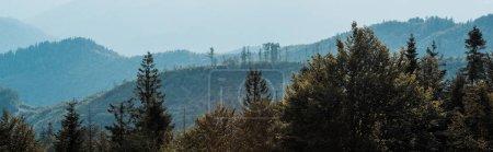 Foto de Foto panorámica de la silueta azul de las montañas cerca de los abetos - Imagen libre de derechos