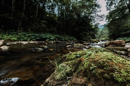 Photo pour Moule verte sur les pierres humides près du ruisseau qui coule - image libre de droit