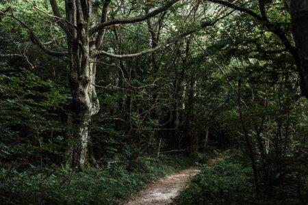 Photo pour Soleil sur le chemin près des arbres verts dans les bois foncés - image libre de droit