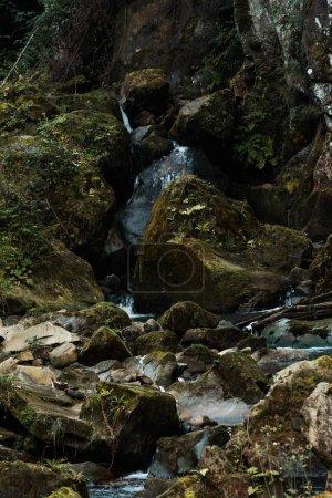 Photo pour Moule sur des roches près du ruisseau coulant dans la forêt - image libre de droit