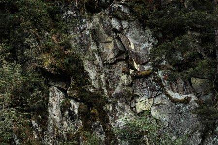 Photo pour Feuilles vertes sur des arbres près des pierres dans la forêt - image libre de droit