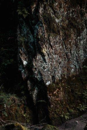 Photo pour Moule verte sur la roche énorme près des usines avec des feuilles - image libre de droit