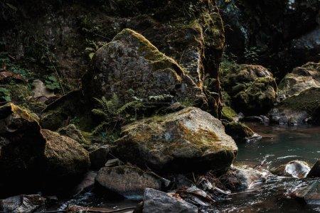 Photo pour Ruisseau coulant près des roches humides avec la moisissure verte - image libre de droit