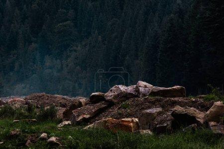 Photo pour Herbe verte et fraîche près des pierres et des arbres - image libre de droit