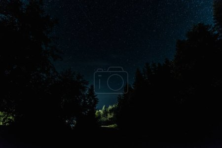 Photo for Blue night sky with shining stars near trees - Royalty Free Image