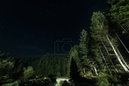 Photo for Low angle view of green trees against night sky with shining stars - Royalty Free Image