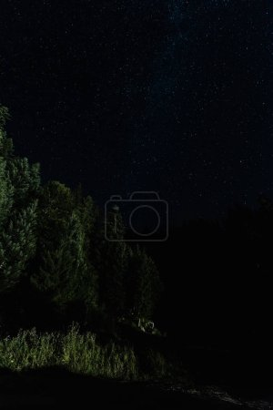 Photo for Low angle view of trees against night sky with stars - Royalty Free Image