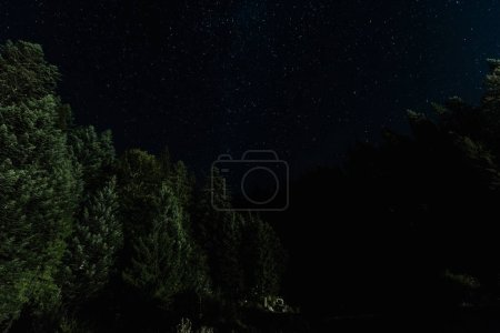 Photo for Low angle view of tress near stars shine at night - Royalty Free Image
