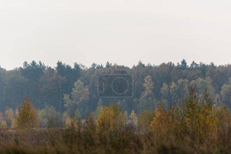 Photo pour Arbres verts dans la forêt contre le ciel gris - image libre de droit