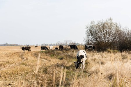 selective focus of herd of bulls and cows standing in field
