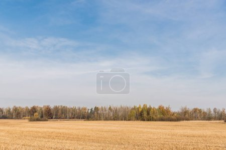 Photo for Golden meadow near green trees against blue sky with clouds - Royalty Free Image