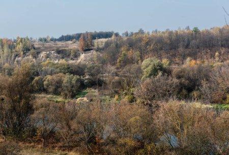 Photo pour Arbres verts dans la forêt contre le ciel bleu - image libre de droit