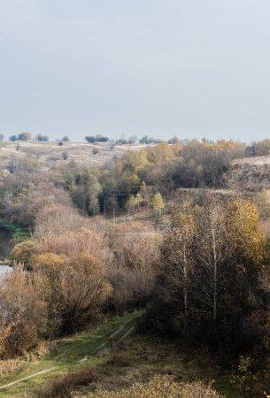 Photo pour Arbres verts dans la forêt près du chemin contre le ciel bleu - image libre de droit
