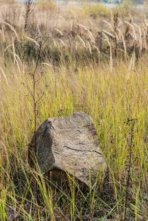 Photo for Stone on ground near green grass in field - Royalty Free Image