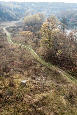 Photo pour Arbres verts et jaunes près du sentier en forêt - image libre de droit