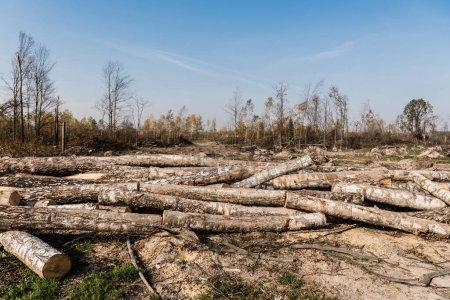 Photo pour Soleil sur les billes de bois sur le sol près des arbres dans les bois - image libre de droit