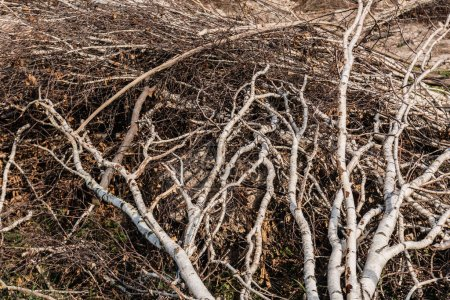 Photo pour Lumière du soleil sur les branches et les branches de l'arbre sur le sol - image libre de droit