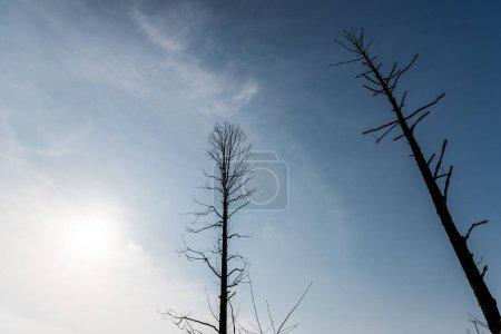 Photo pour Vue à angle bas des branches sur les arbres contre le ciel bleu et le soleil - image libre de droit