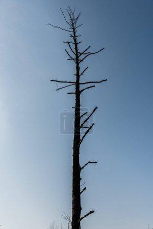 Photo pour Branches sur arbre foncé contre ciel bleu - image libre de droit