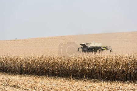 Photo for Golden wheat field and tractor against sky - Royalty Free Image