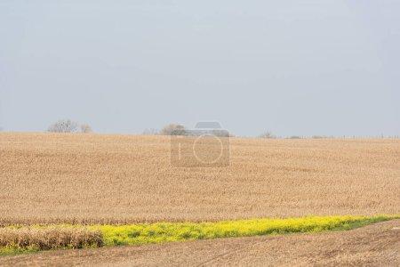 Photo pour Fleurs à fleurs jaunes près du champ de blé doré - image libre de droit