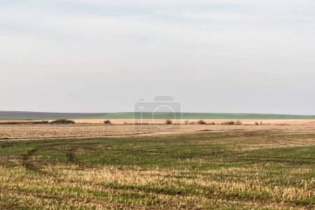 Photo pour Pelouse herbeuse et champ contre le ciel avec des nuages - image libre de droit